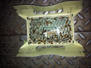 kakkerlakken detectie