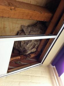 wespennest op plafond kinderdagverblijf