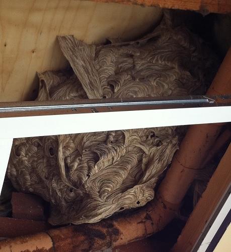 wespen bestrijden in huizen