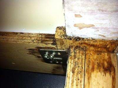 kakkerlakken onder de bar